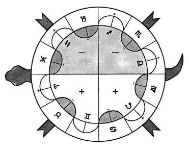 Pentan Turtle A1